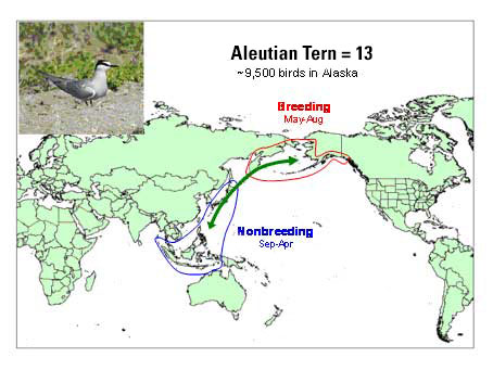 Distribution map of Aleutian Tern
