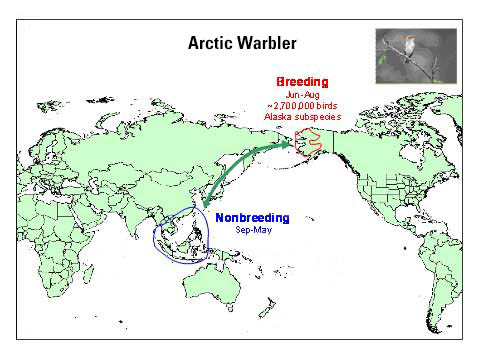 Distribution map of Arctic Warbler