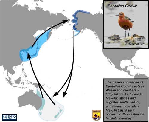 Distribution map of Bar-tailed Godwit