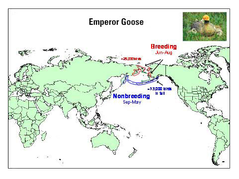Distribution map of Emperor Goose