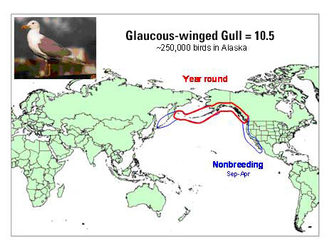 Distribution map of Glaucous-winged Gull