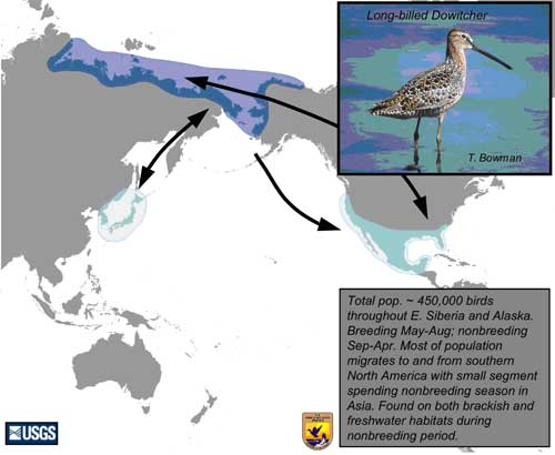 Distribution map of Long-billed Dowitcher