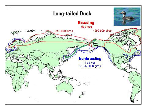 Distribution map of Long-tailed Duck