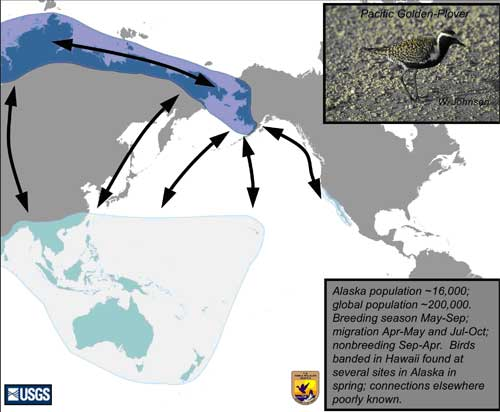 Distribution map of Pacific Golden-Plover