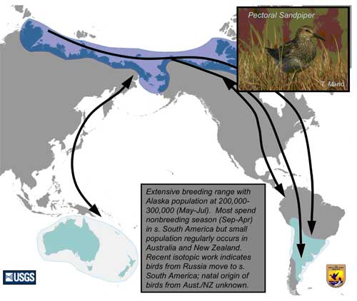 Distribution map of Pectoral Sandpiper