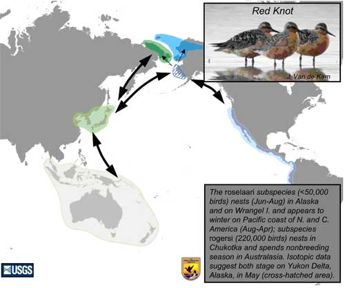 Distribution map of Red Knot