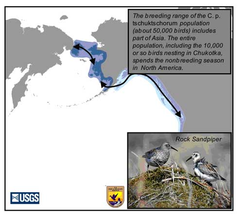 Distribution map of Rock Sandpiper