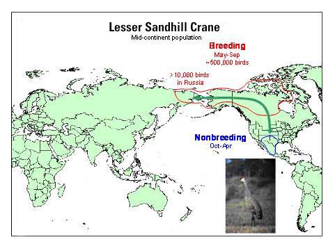 Distribution map of Lesser Sandhill Crane