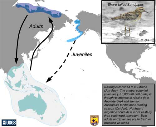 Distribution map of Sharp-tailed Sandpiper