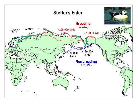 Distribution map of Steller's Eider